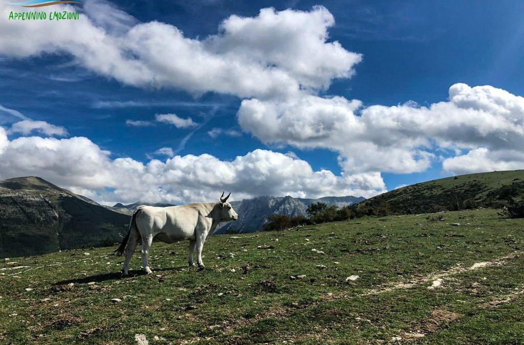 :. 21/11 – Escursione Paradisi Sibillini: Monte Careschio e panorami