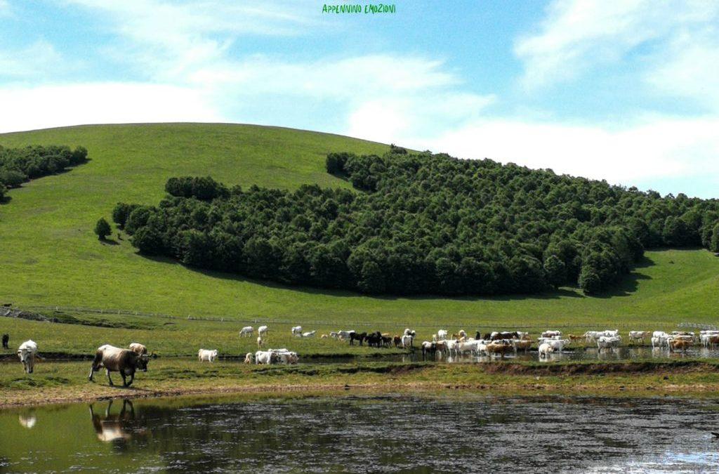 :. 13/06 – Escursione ai Selvaggi Pantani di Accumoli