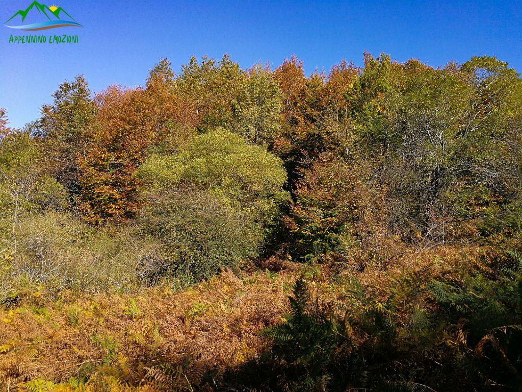 .: 02/11 – Escursione Emozioni d'Autunno: Altino, boschi in colore e le Cacce