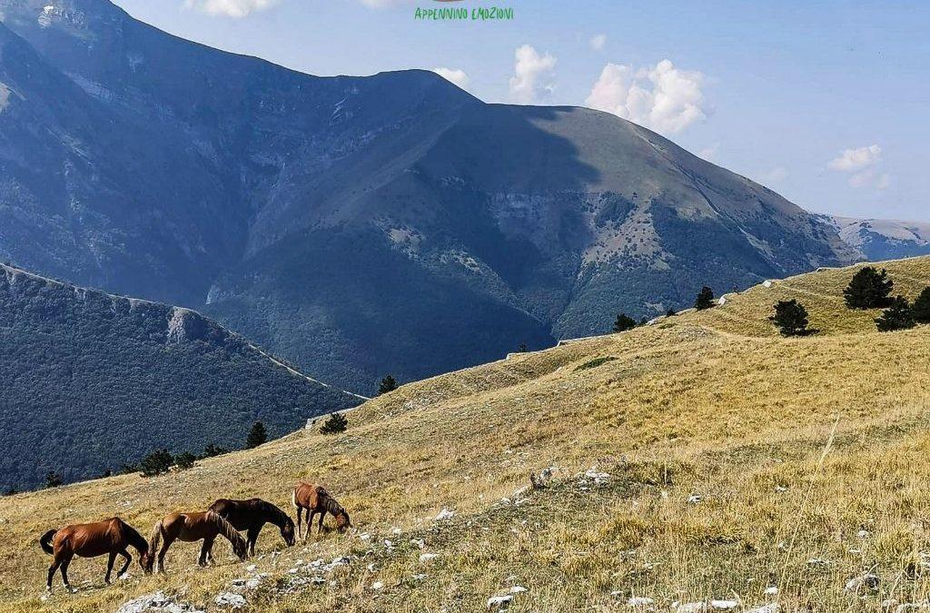 :. 28/11 – Escursione al panoramico Monte Sassotetto