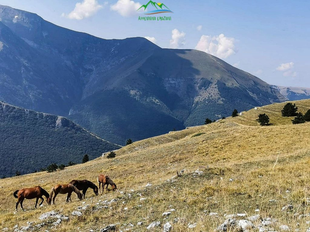 :. 17/10 – Escursione al panoramico Monte Sassotetto