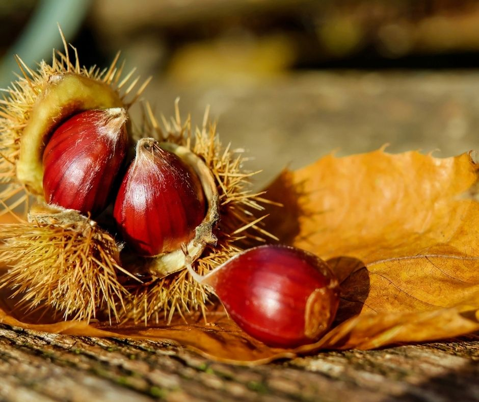 :. 18/10 – Escursione Sibillini: autunno, colori e castagne ad Arquata
